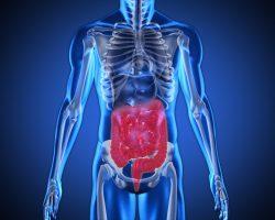 Desequilíbrio de bactérias no sistema digestivo pode causar problemas